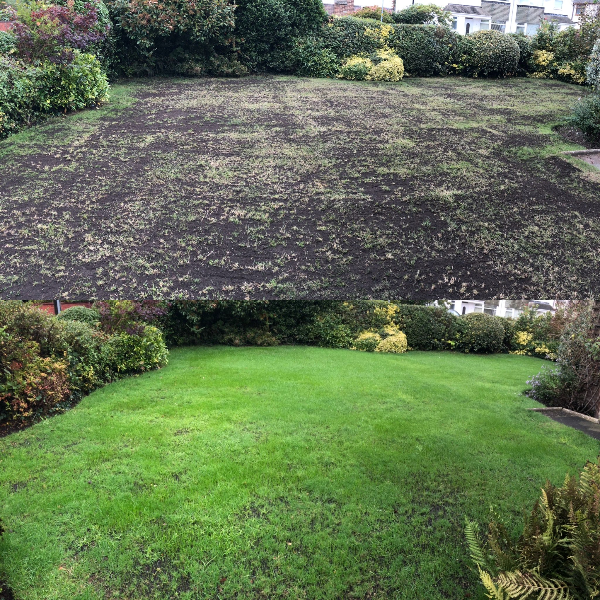 cently renovated lawn