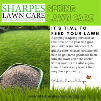 Spring Weed and Feed